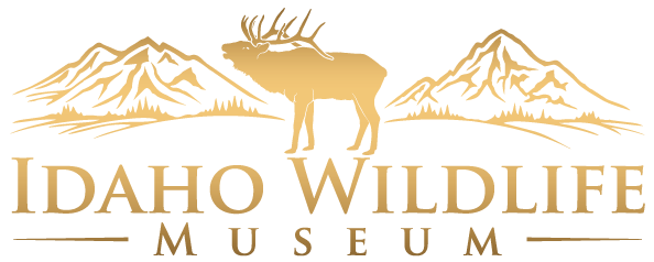 Idaho Wildlife Museum